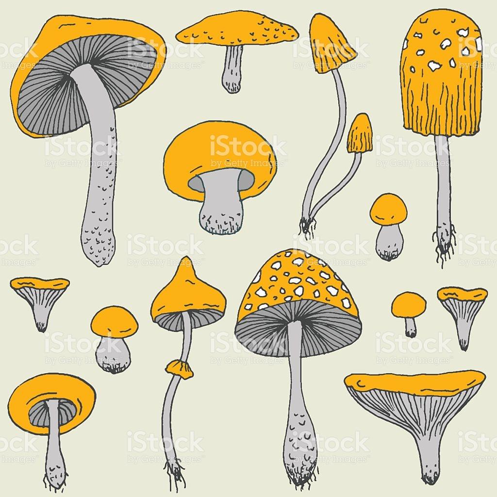 Set Of Forest Mushrooms Vector Hand Drawn Sketch stock vector art.