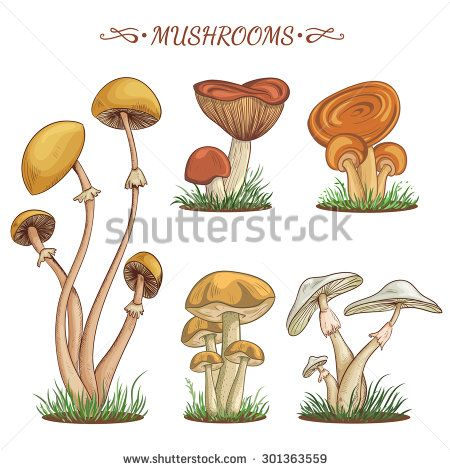 1000+ images about Mushrooms on Pinterest.