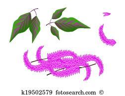 Amaranth Clip Art EPS Images. 34 amaranth clipart vector.