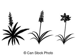 Vector Clip Art of Amaryllidaceae plant family examples set.