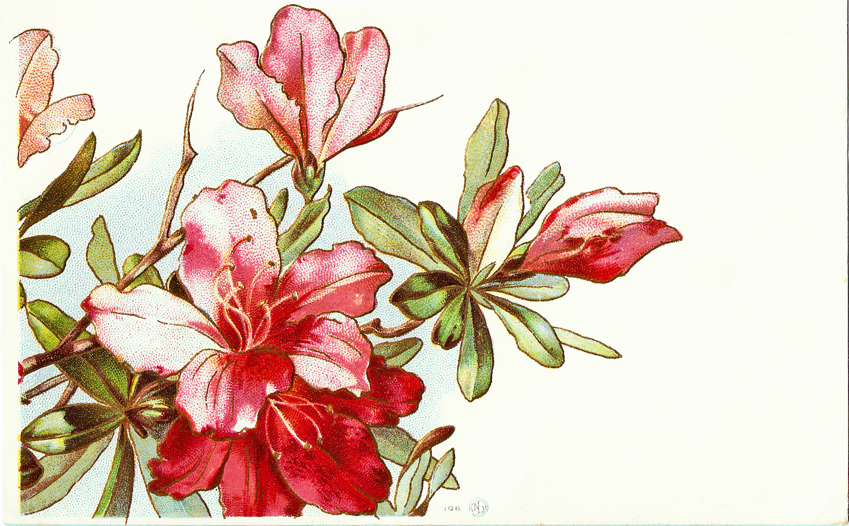 Free Amaryllis Flower Cliparts, Download Free Clip Art, Free.