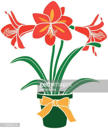 Amaryllis Plant In A Pot Vector Art.