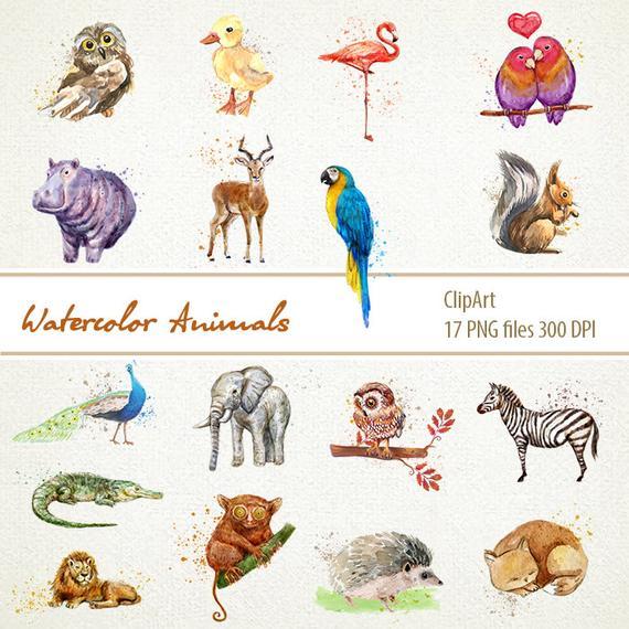 Wild Animals Clipart Watercolor Animal download Animals.