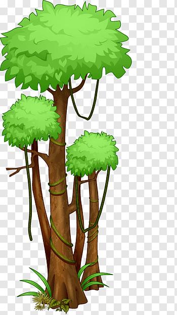 Amazon rainforest cutout PNG & clipart images.
