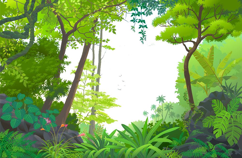 Amazon Rainforest PNG Clipart.