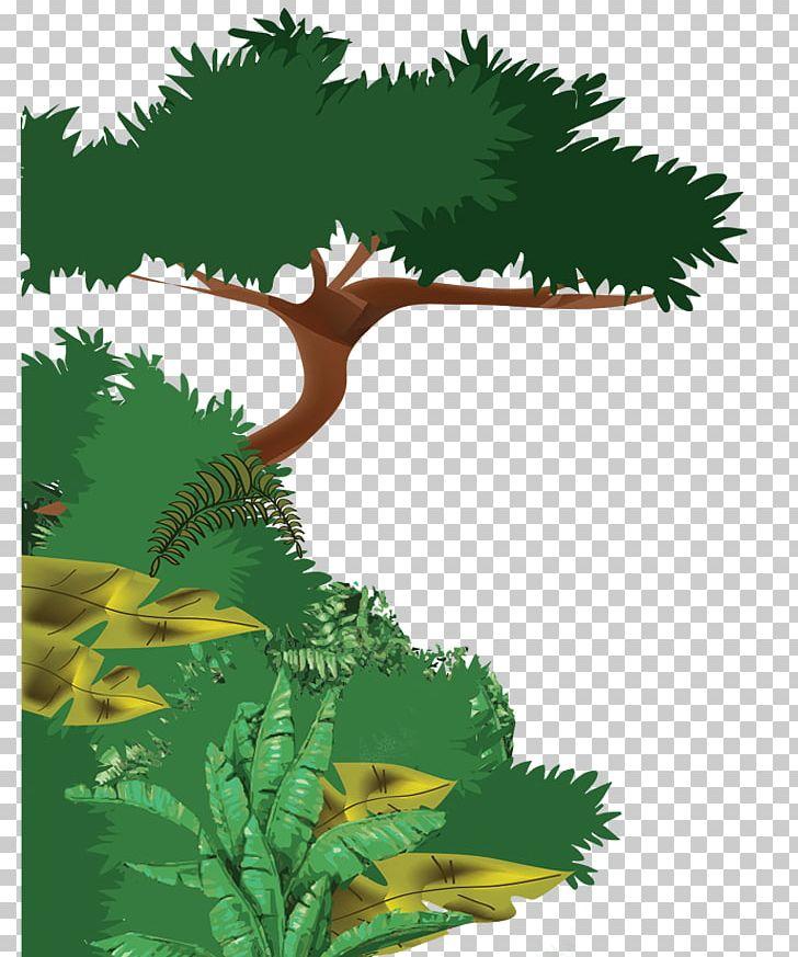 Amazon Rainforest Cloud Forest Tropical Rainforest Plant PNG.