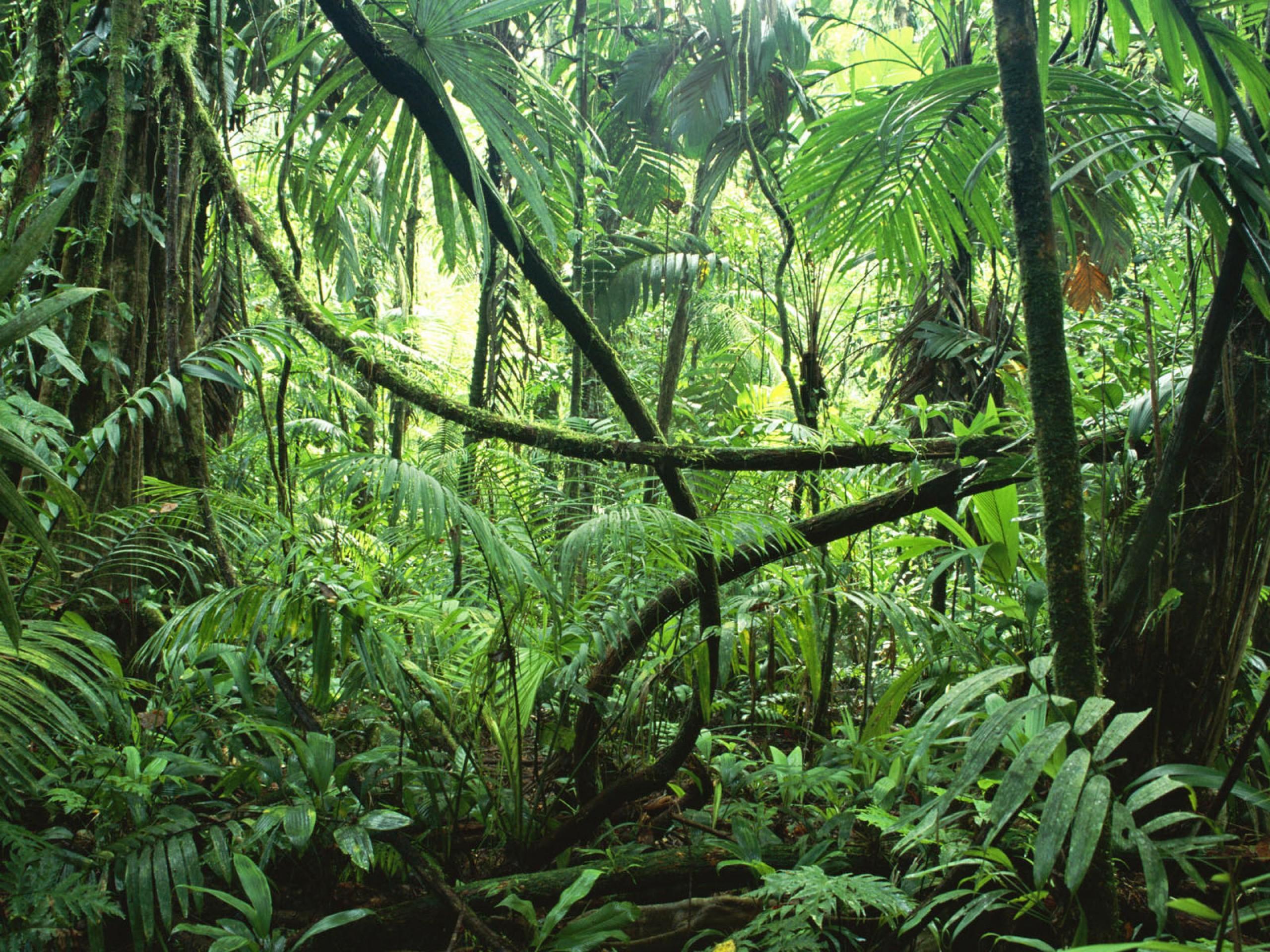 Amazon jungle clipart.