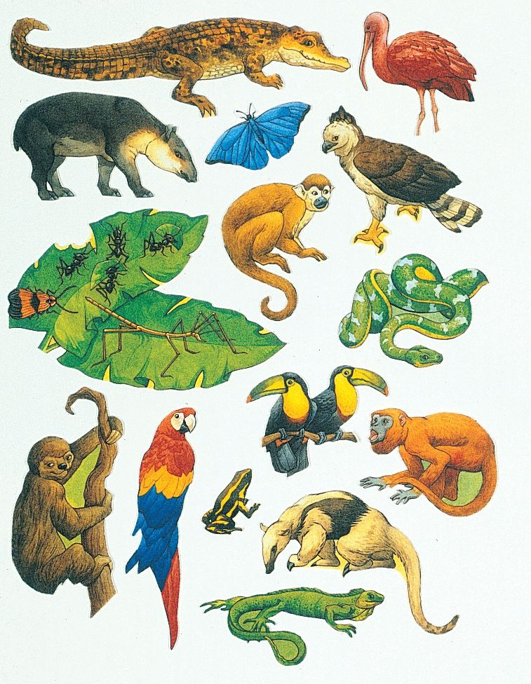 black and white clip art of rainforest animals.