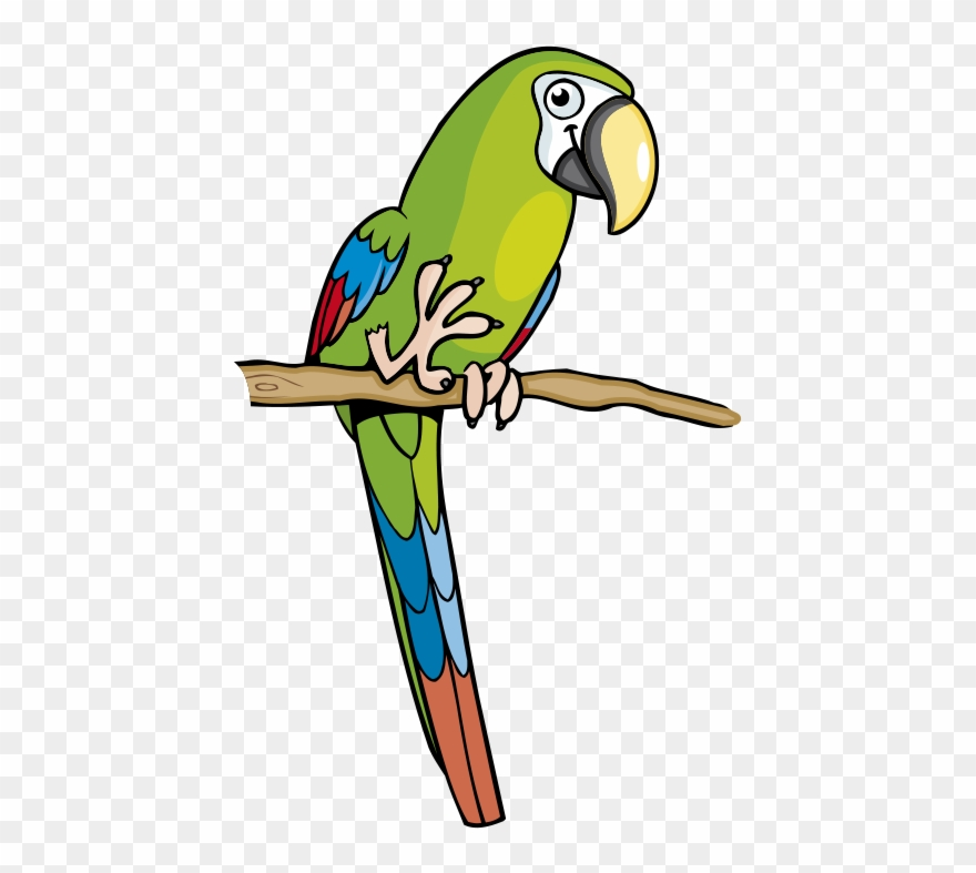 Parrot Clipart Amazon Parrot.