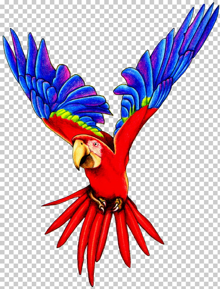 Amazon parrot Bird Macaw , Flying Parrot Pic, scarlet macaw.