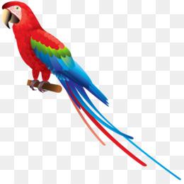Amazon Parrot PNG.
