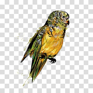 Small Parrot PNG clipart images free download.