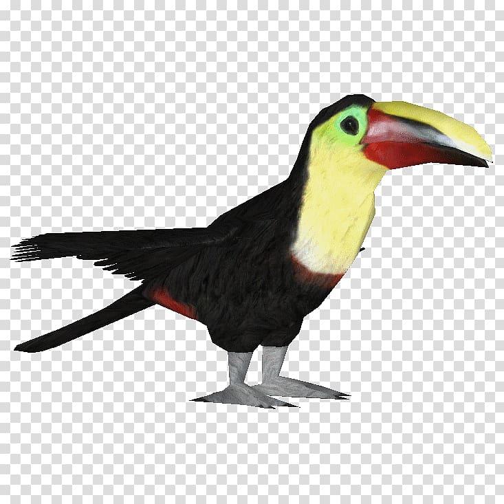 Bird Ramphastos Parrot Woodpecker Owl, toucan transparent.