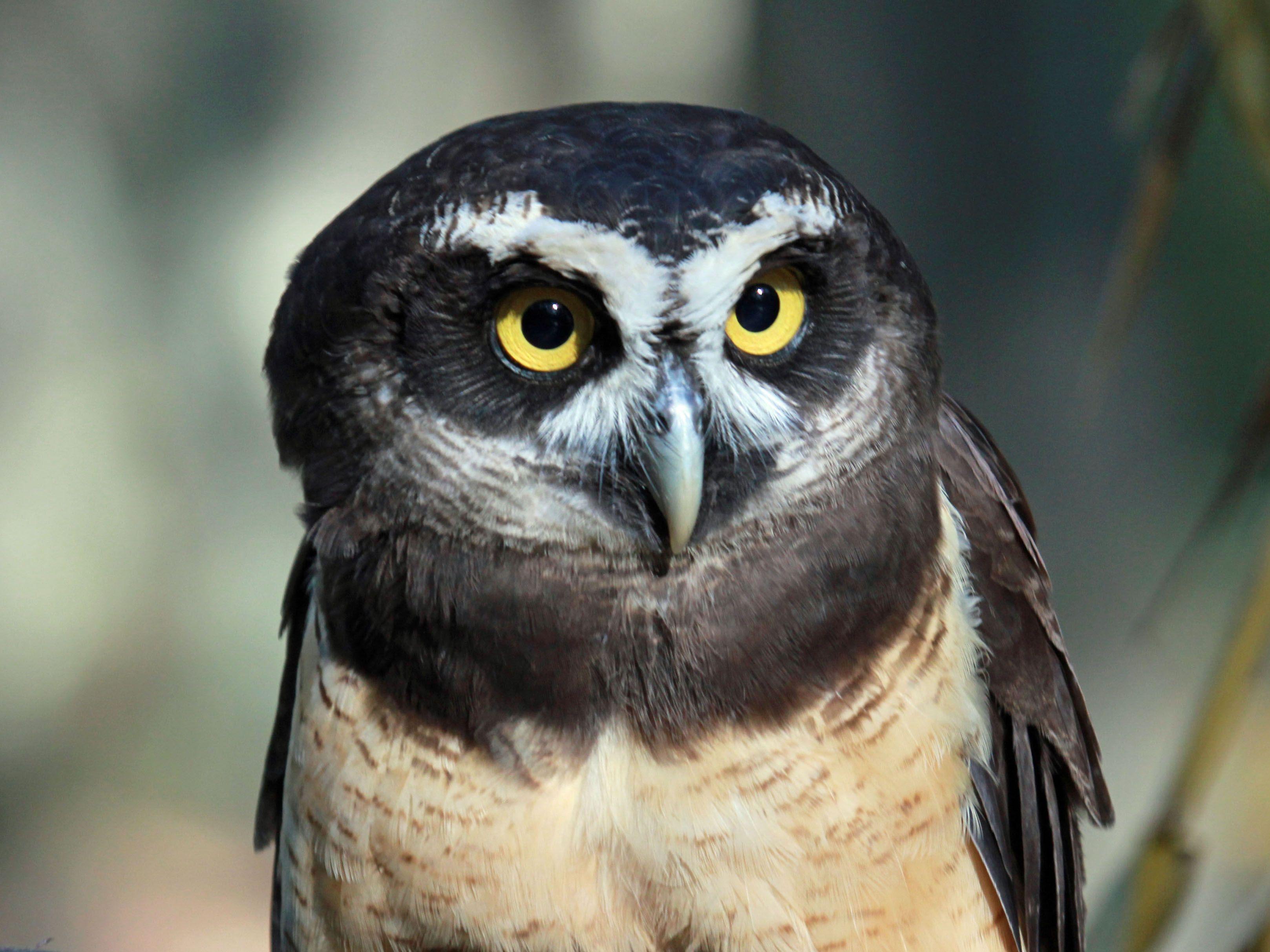 29 Best Owls images.