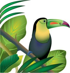 The Amazon Rainforest Clipart.