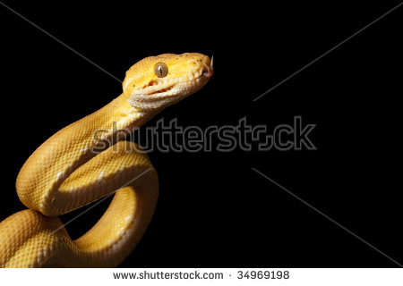 Vector Images, Illustrations and Cliparts: Amazon tree boa.
