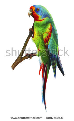 Vector Three Color Parrots Sitting On Stock Vector 16317253.