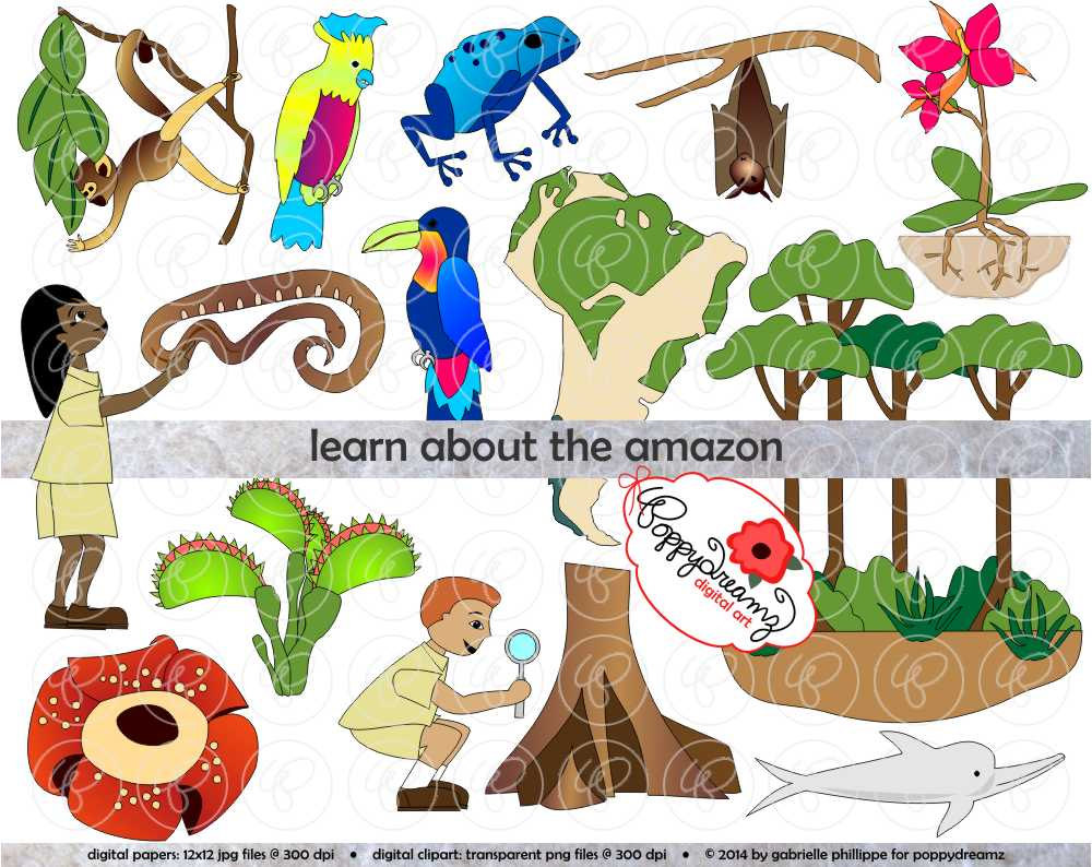 Amazon jungle clipart.