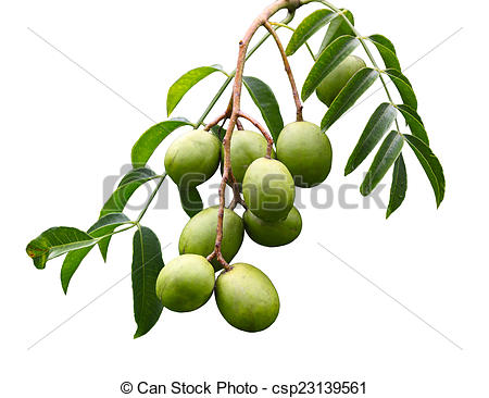 Stock Image of Spondias dulcis Fruit.