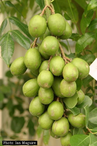 1000+ images about My yard fruit trees on Pinterest.