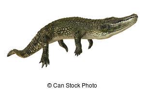 American alligator Illustrations and Clip Art. 77 American.