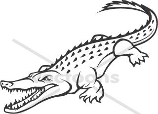 Wild American Crocodile.