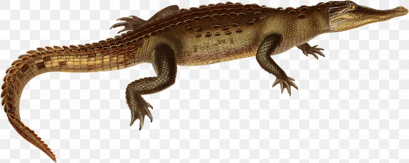 American Crocodile American Alligator Agamas Clip Art Image.