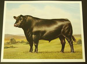 American Angus Association Clipart 20 Free Cliparts