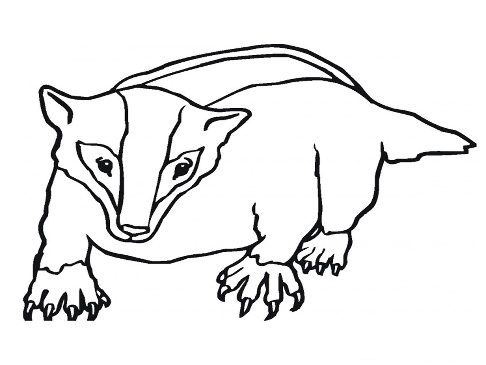 Badger clipart badger face, Badger badger face Transparent.
