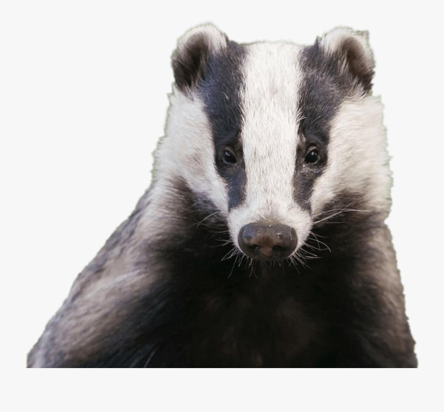 Badger Head.