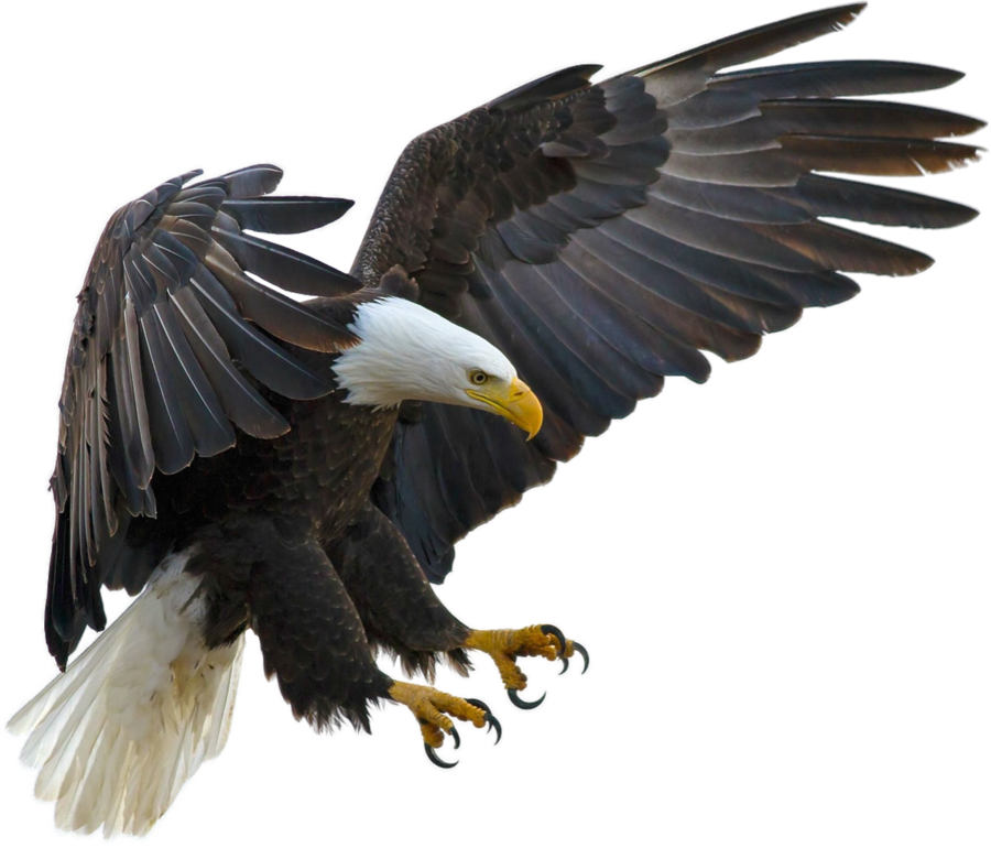 Eagle Transparent PNG, Eagle Head, Bald Eagle Clipart Free.