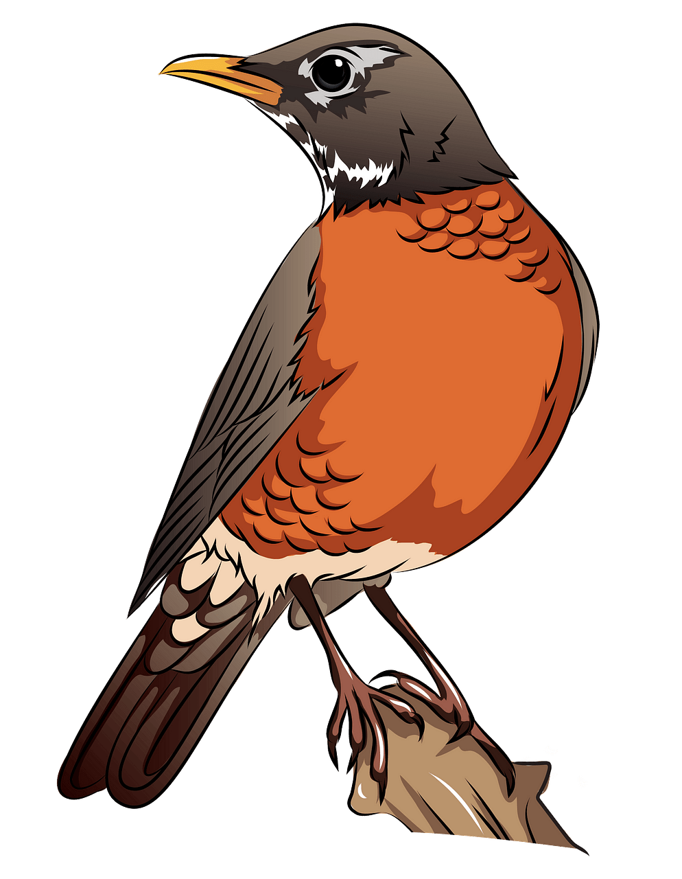 American Robin on the Branch clipart. Free download..