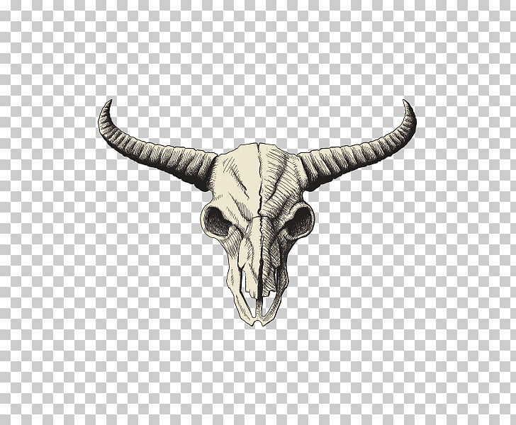 Skull American bison Drawing , skull PNG clipart.
