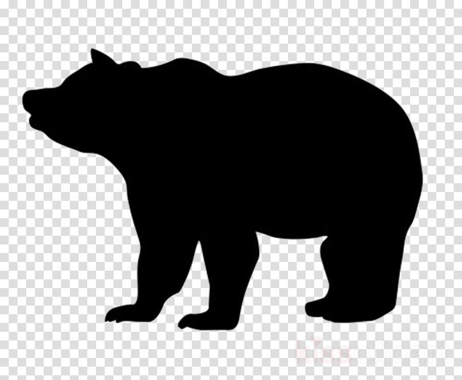 bear black terrestrial animal american black bear grizzly.