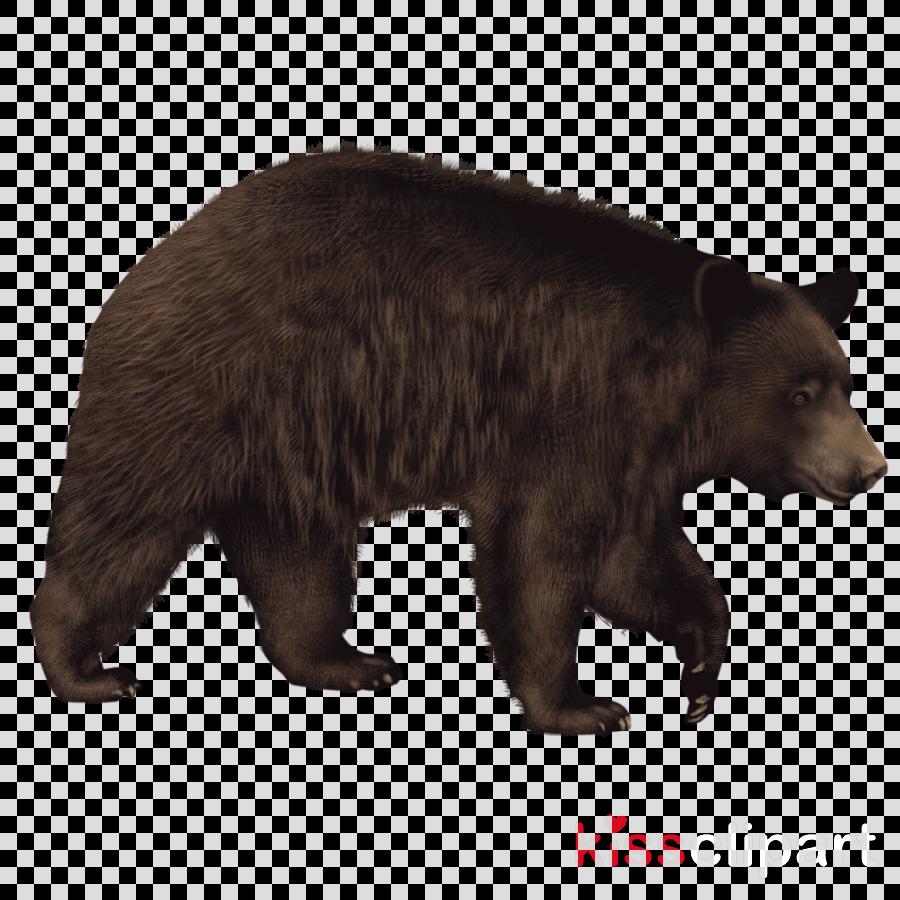 bear animal figure american black bear grizzly bear brown.