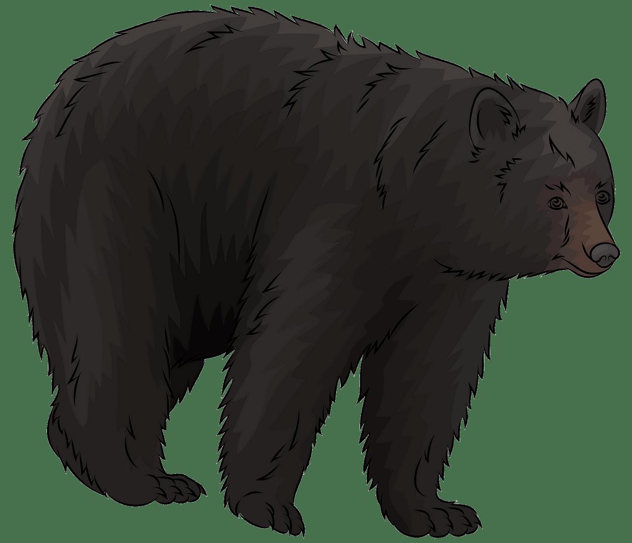 American Black Bear clipart. Free download..