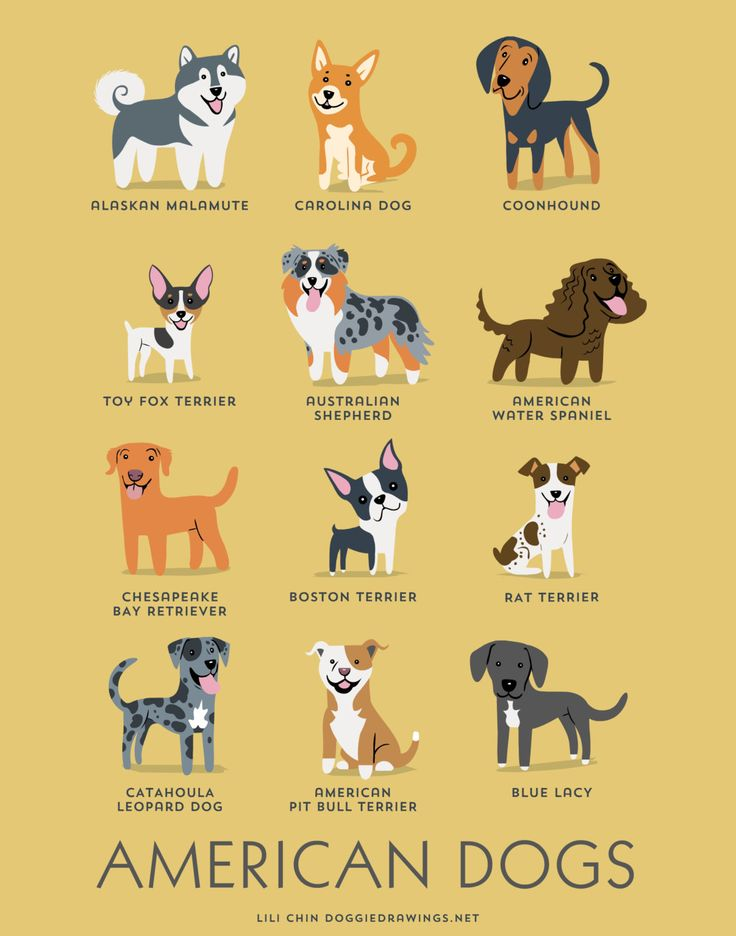 American Blue Lacy Clipart.