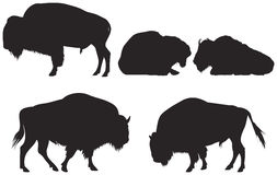 Buffalo Stock Illustrations.