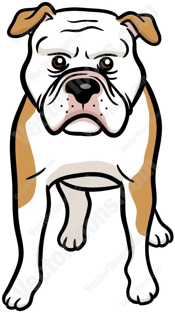 1000+ ideas about White American Bulldogs on Pinterest.