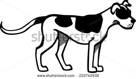 American Bulldog Stock Photos, Royalty.