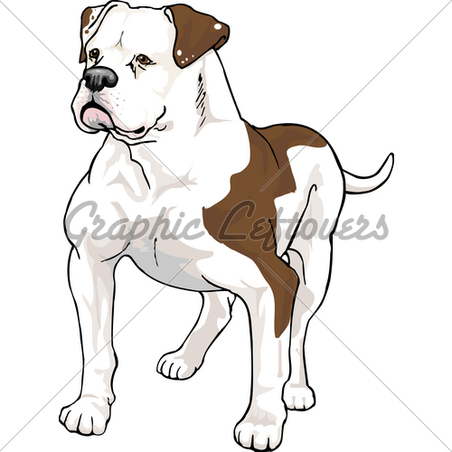 Amercian Bulldog · GL Stock Images.