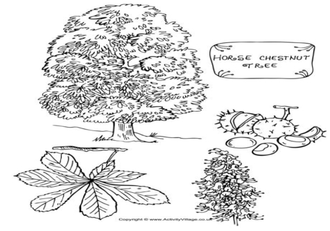 Conker Coloring Pages coloring page, coloring image, clipart images..