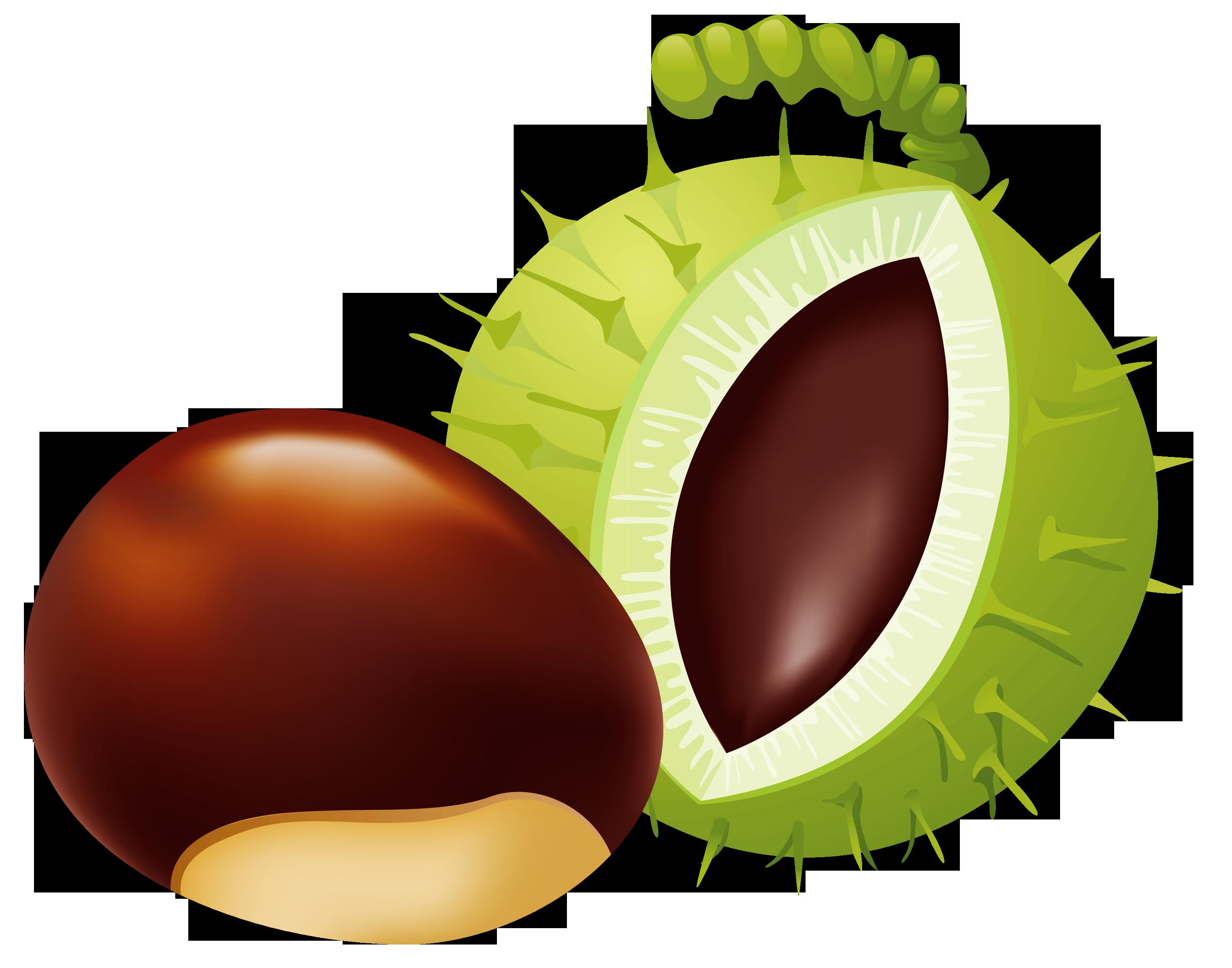 Chestnut PNG Clip Art.