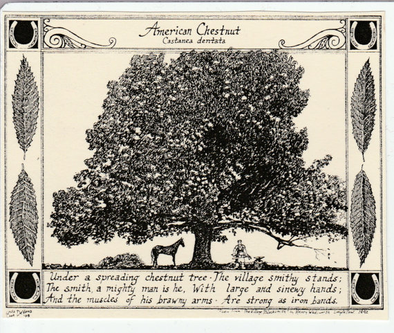 American Chestnut Tree and poem.