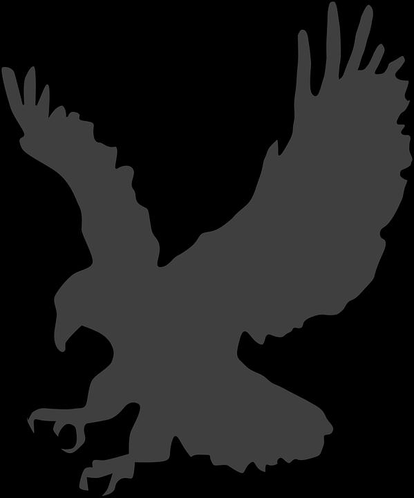 Free vector graphic: Eagle, Great, American, Hawk.