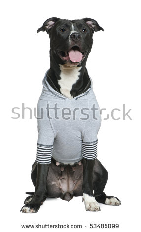Dog Wearing A Shirt Stock Photos, Royalty.