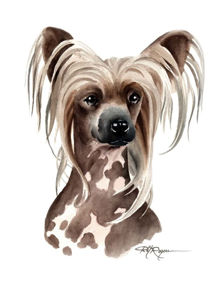 148 Best images about Leura Jewel our Chinese Crested on Pinterest.