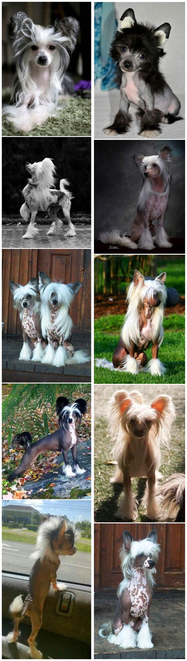 Top 15 Cutest Small Dog Breeds.