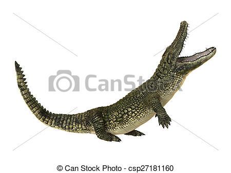 Stock Illustration of American Alligator.