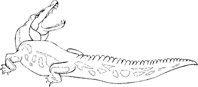 Free Alligator Graphics.